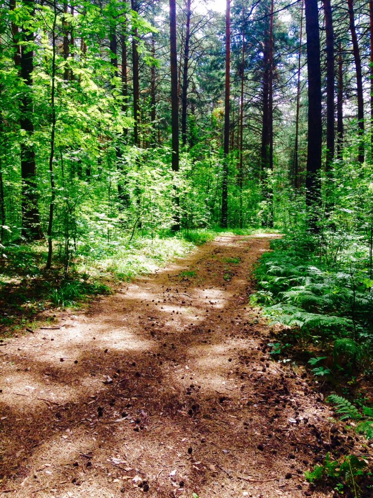 Green forest and a trail